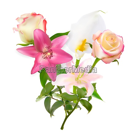 vector illustration with pink lily calla