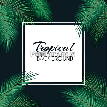 palm leaf vector background with
