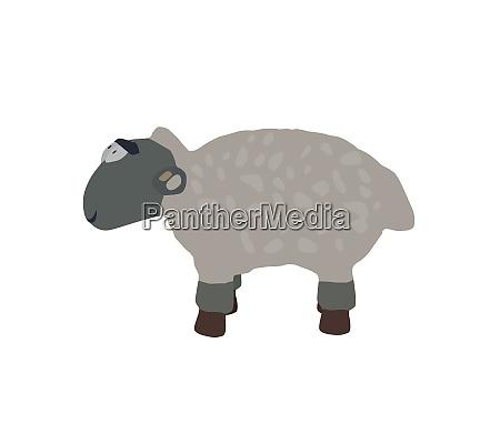 funny lamb isolated on white background