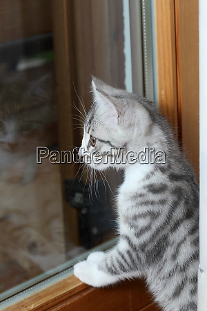 little young cat is viewing