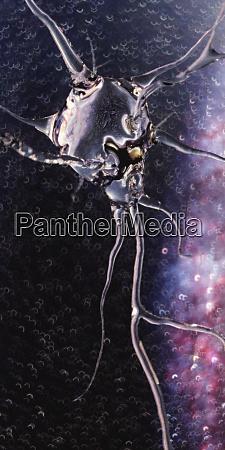computer generated translucent neuron