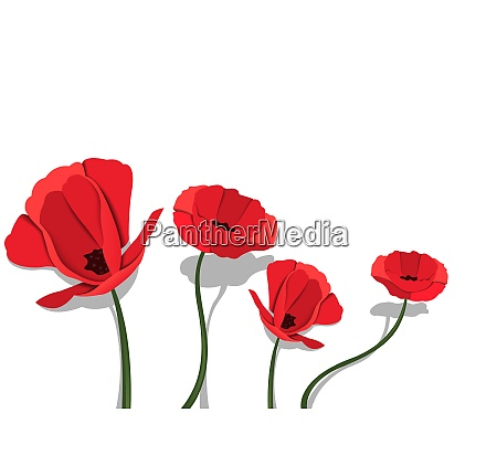 red paper flowers on white background