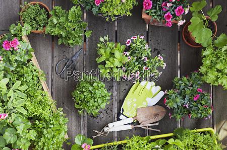 plantning urter og blomster til indendors