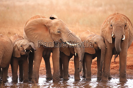 a group of elephants at a
