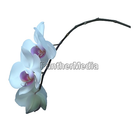 white orchid plant with flowers