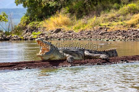 store nile krokodille chamo so falls