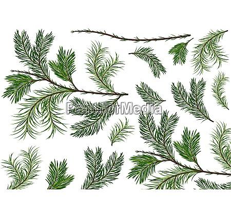 set of green spruce twigs
