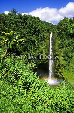 frodig vegetation indramning akaka falls akaka