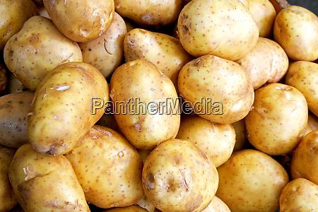 kartoffel vandret