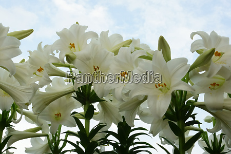 luksurios smuk og smuk blomstrende