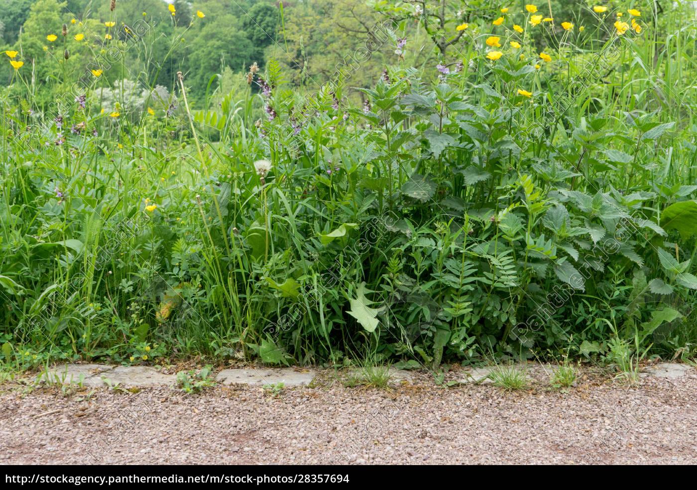 wild, plants, in, spring - 28357694