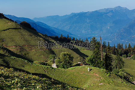 horses grazing in himalayas mountains