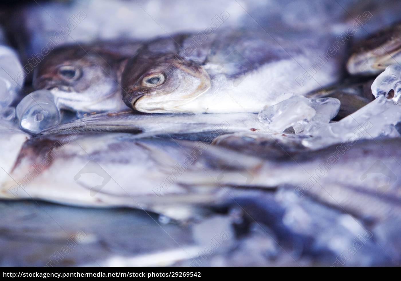 nærbillede, af, en, bunke, døde, fisk - 29269542