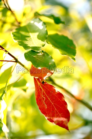 vaekst i efterarsplanter