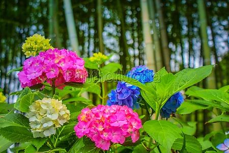 Billed-id 30366701